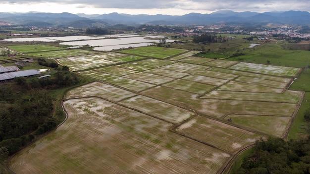 Champ de riz aérien. beau paysage. ville en arrière-plan