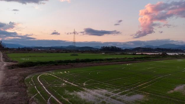 Champ de riz aérien sur sunset landscape