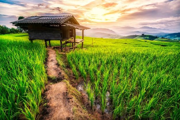 Champ de riz à chiang mai