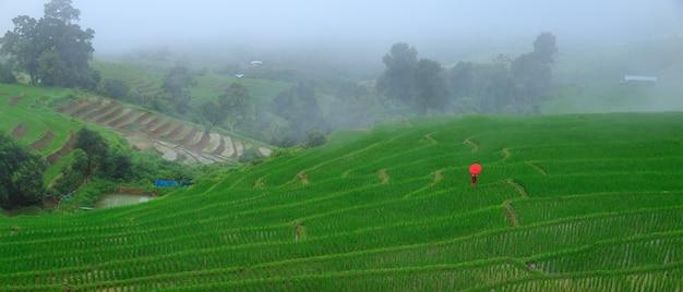 Champ de riz en terrasses au village de pa bong paing, chiang mai, thaïlande