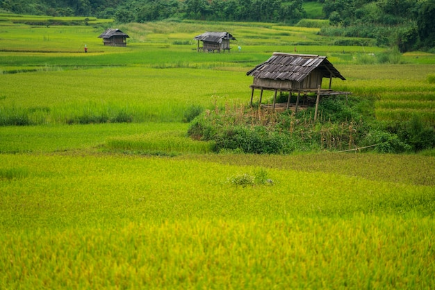 Champ de riz en terrasses à mu cang chai, vietnam