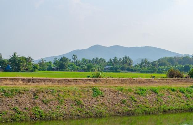 Champ de riz vert luxuriant et coucher de soleil