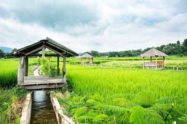 Champ de riz vert avec paillote maison-séjour