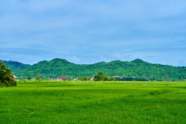 Champ de riz vert paysage impressionnant avec des montagnes à la surface