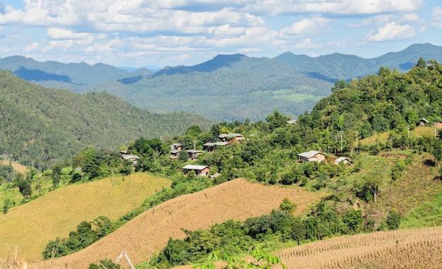 Champ de terrasse de maïs séché en thaïlande
