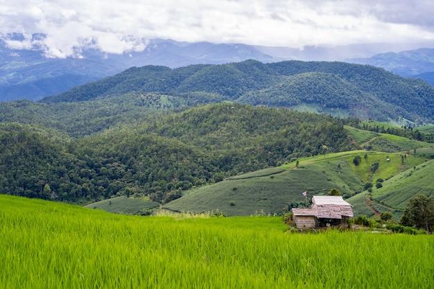 Champ de terrasse de riz sur fond de paysage de montagne.