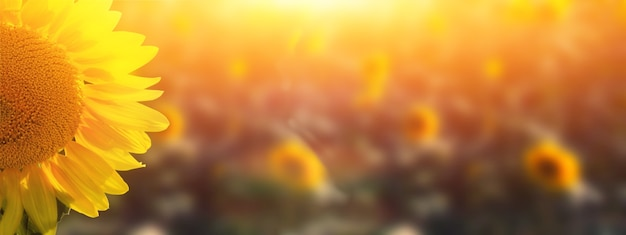 Champ de tournesols en fleurs sur un fond de ciel bleu