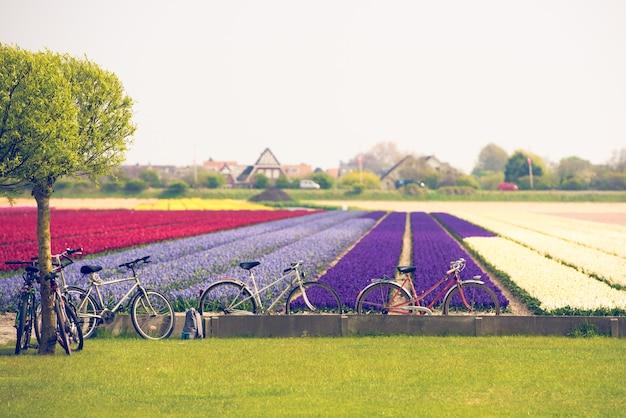 Champ de tulipes multicolores aux pays-bas