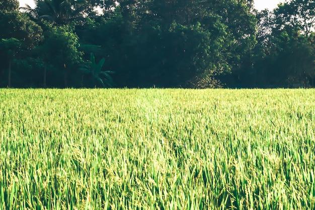 Champ vert, arbre et ciel bleu. super comme arrière-plan. prairie ensoleillée avec de l'herbe verte et de grands arbres dans le parc.