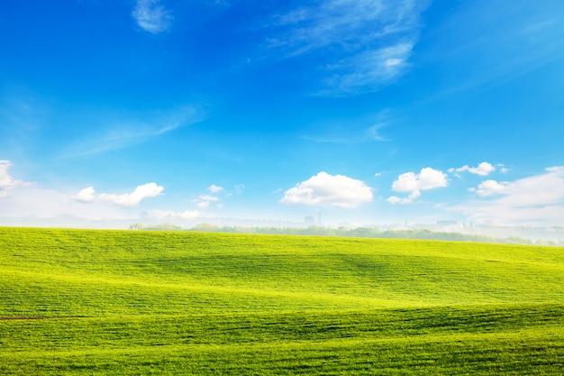 Champ vert et beau coucher de soleil