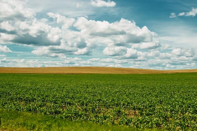 Champ vert, ciel bleu, nuages blancs.