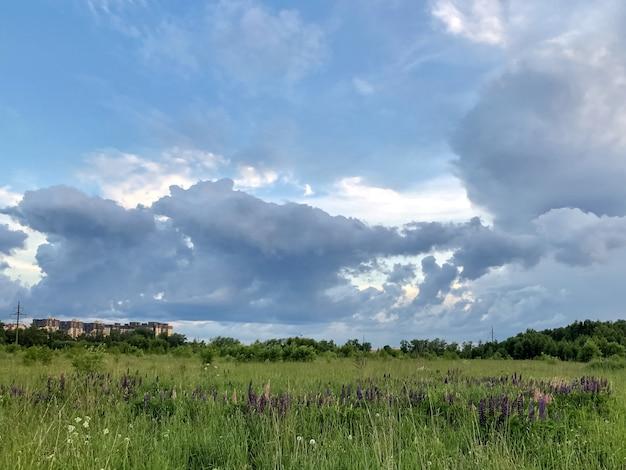 Champ vert avec des fleurs de lupin en fleurs sous un ciel couvert de soirée orageuse