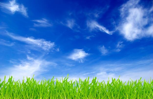 Champ vert sur fond de ciel bleu
