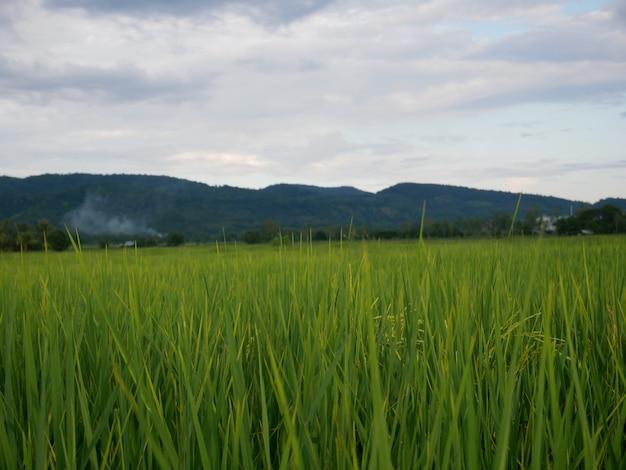 Champ vert et pourrait fond de ciel, fond de plante nature