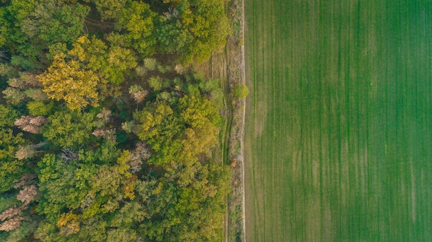 Champ vert et vue aérienne de la forêt d'automne