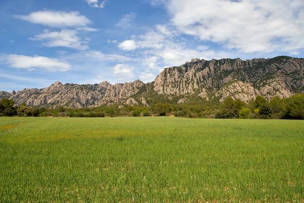 Champ de vue de jour d'été avec des coquelicots sur fond de montagnes