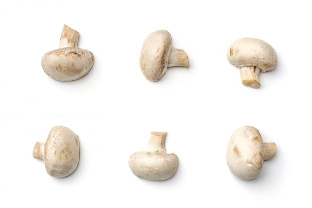 Champignon champignon isolé sur fond blanc