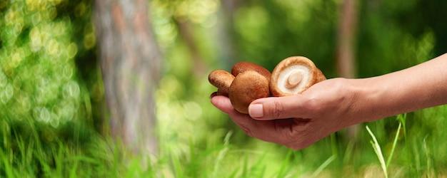 Champignon comestible à la main sur le fond de la forêt, saison estivale