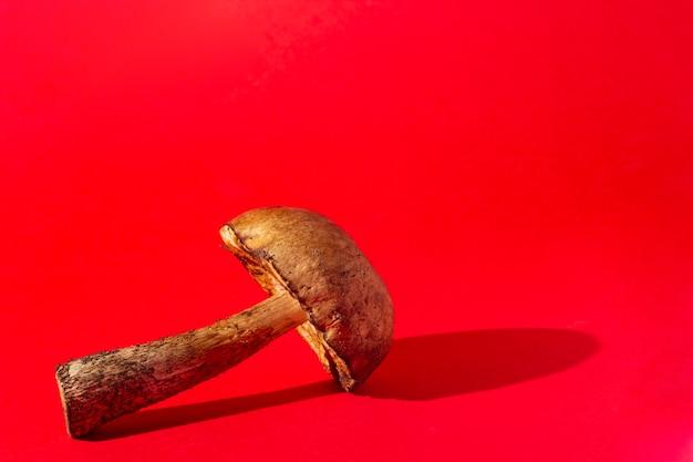Champignon forestier sur fond rouge