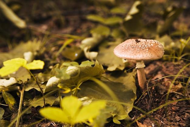Champignon en forêt