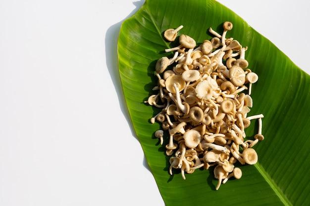 Champignon frais sur feuille de bananier