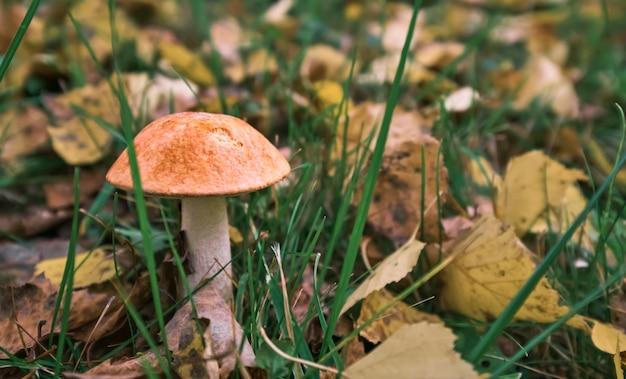 Un champignon jaune sur l'herbe verte avec des feuilles tombées