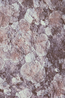 Champignon et lichen sur rocher