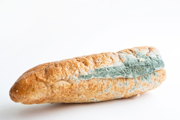 Champignon de moisissure bleue sur gros plan de pain blanc.