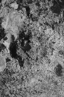 Champignon noir et blanc et lichen sur rocher