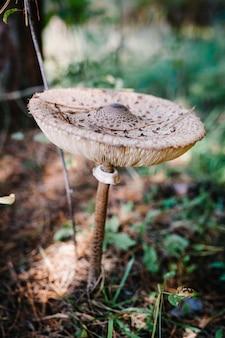 Champignon poussant dans l'herbe dans la forêt