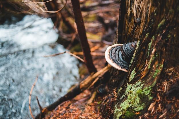 Champignon poussant sur un tronc d'arbre