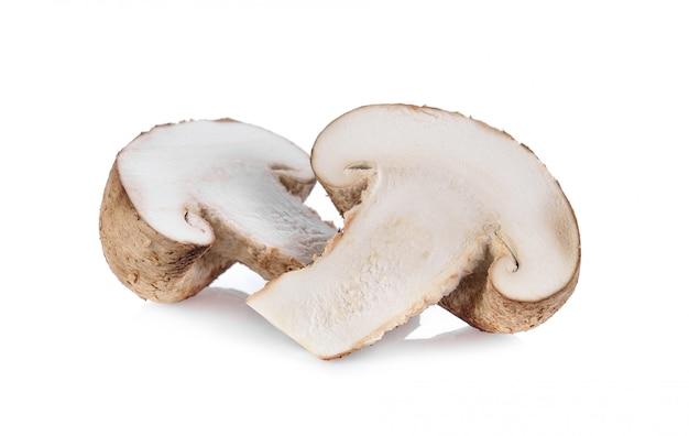 Champignon shiitake sur espace blanc