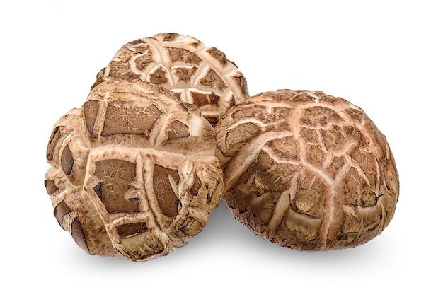 Champignon shiitake isolé sur un tracé de détourage blanc