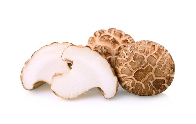 Champignon shitake sur fond blanc