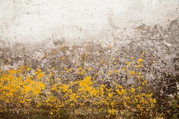 Champignon à la surface. moisissure toxique et bactérie fongique sur un mur blanc.