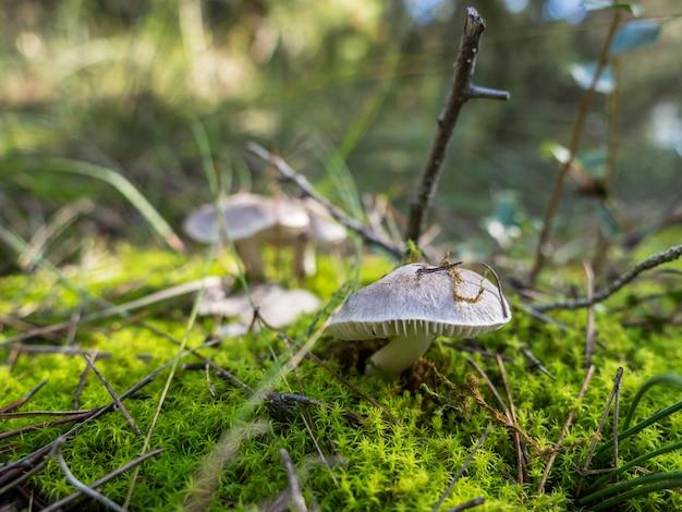 Champignons d'automne dans la forêt