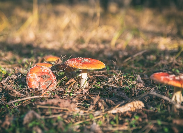 Champignons dans la forêt