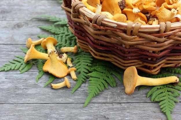Champignons girolles dans un panier et feuille de fougère sur une table rugueuse