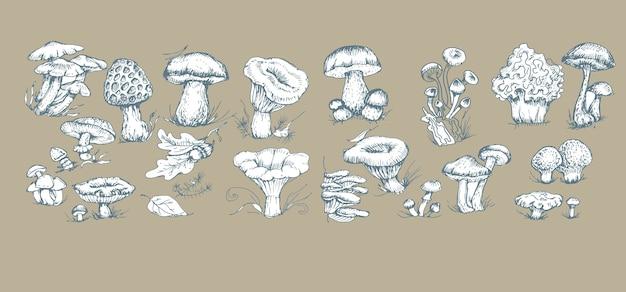 Champignons graphiques dessinés à la main impression textile illustration fond ensemble patern coloration transparente