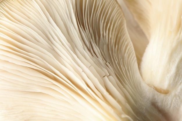 Champignons huîtres frais crus texturés, macro