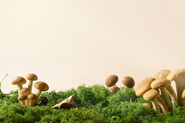 Champignons de miel dans le concept de mousse de forêt cueillir des champignons