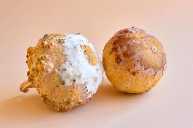 Les champignons et les moisissures ont détruit la citrouille mûre lors de violations de stockage