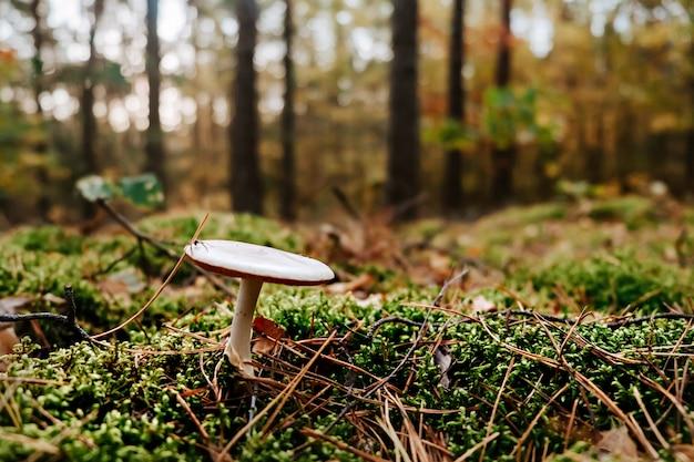 Champignons sur la mousse en forêt