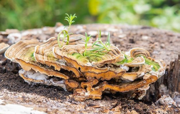Champignons sauvages sur bois et nature matin