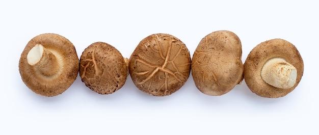 Champignons shiitake frais sur une surface blanche