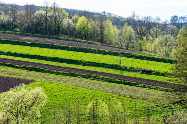 Champs agricoles privés géométriques