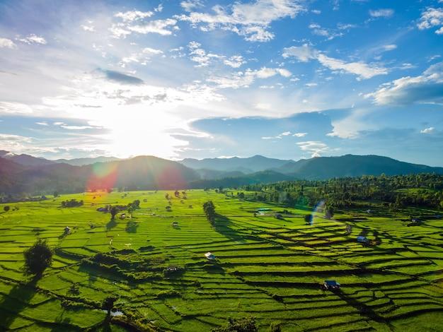 Champs agricoles de verdure avec ciel coucher de soleil