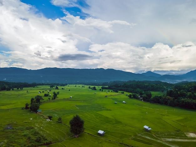 Champs agricoles de verdure avec ciel nuageux