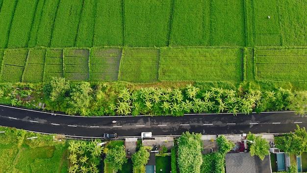 Des champs à bali sont photographiés à partir d'un drone
