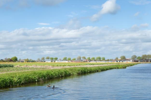 Champs de fleurs en fleurs près du canal de la campagne néerlandaise